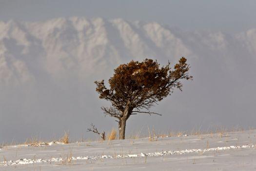 Lone tree on wind blown High Plains
