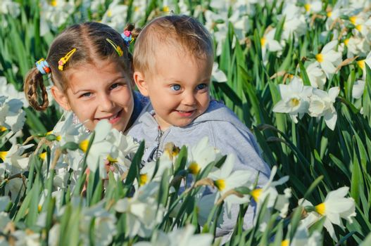 Cute little sister and brother sitting on the meadow with daffodils