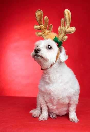 Cute puppy dog with antlers