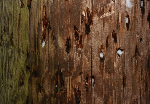 Closeup texture of wooden pole with patches of snow