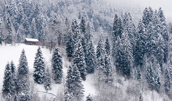 Winter scene. Small house in snow covered woods in the Swiss Alps.