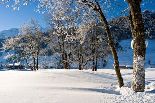 Snowy winter morning