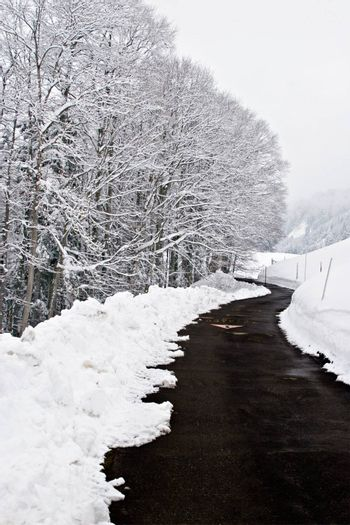 View over a tarmac road, surrounded by snow and icy trees.