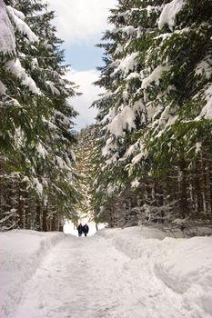 A snow path in Switzerland.