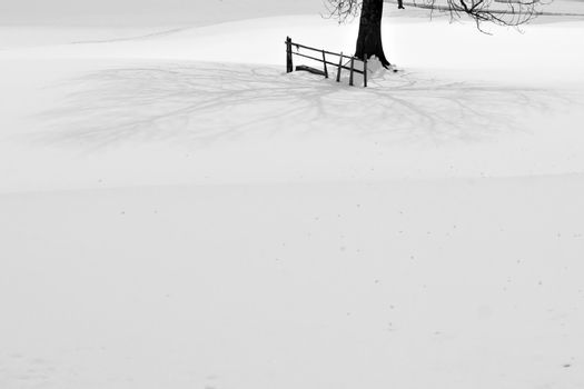 Tree and fence shadow on snow.