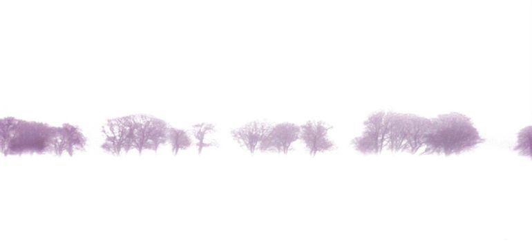 a row of trees in a snowstorm