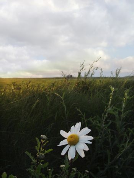 a flowers under a blue sky