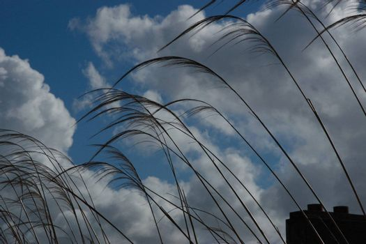 reeds in a seaside town