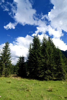 Dolomites Meadows