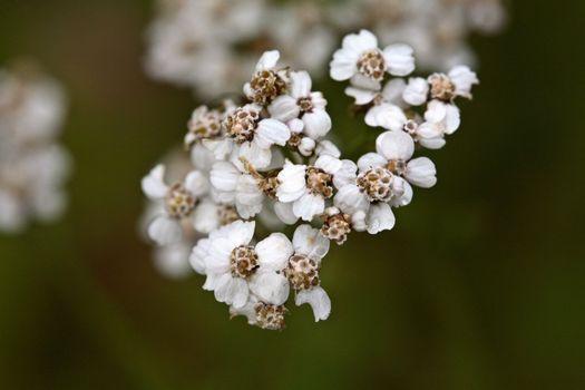 Wildflowers in scenic Alberta