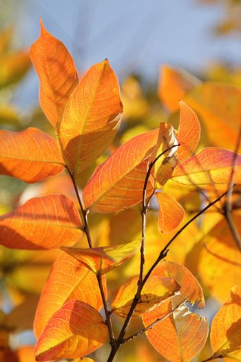 A branch with bright red and orange autumn leaves