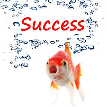 goldfish and word success showing business finance or growth concept