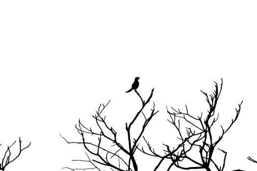 Silhouette of a bird on top of branches with white background