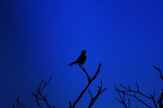 Silhouette of bird on a branch with blue background