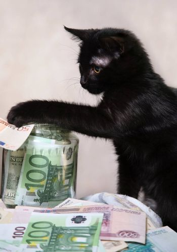 The black kitten plays with money