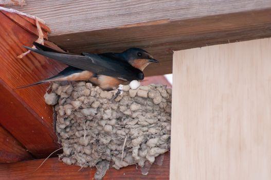 Bird incubating at nest