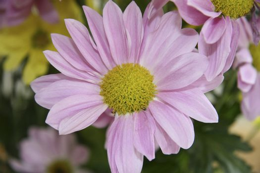 a single beautiful flower