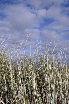 west coast tall grass