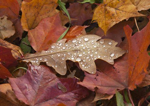 Dew on Autumn Leaves
