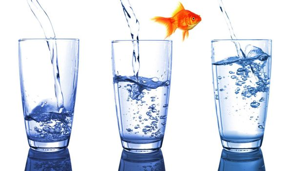 goldfish and glass showing financial growth concept
