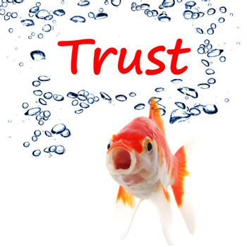 trust word and goldfish showing assurance confidence or protection concept
