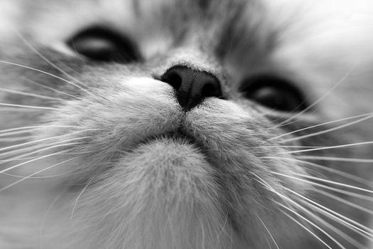 Close-up of a nose of a cat