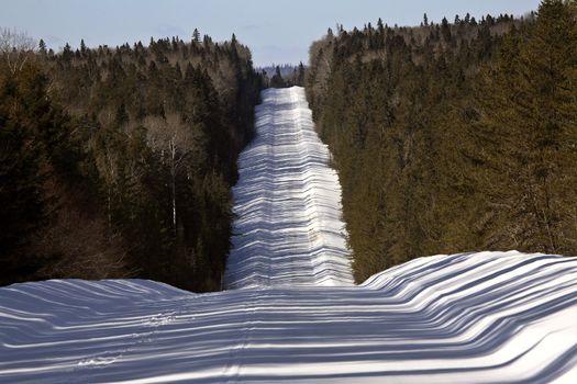 logging road in winter