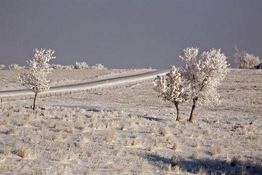 A Frosty Country Day