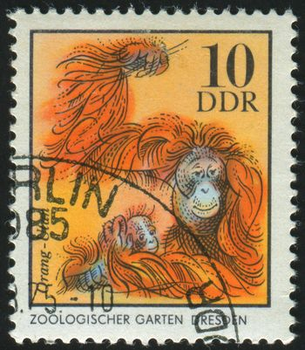 GERMANY - CIRCA 1975: stamp printed by Germany, shows Orangutan family, circa 1975.