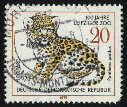 GERMANY- CIRCA 1978: stamp printed by Germany, shows leopard, circa 1978.
