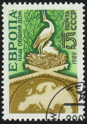 RUSSIA - CIRCA 1989: stamp printed by Russia, shows storks in nest , circa 1989.