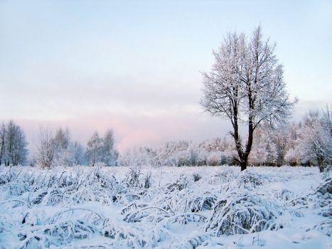frozen tree. winter scenery.