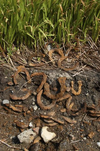 discarded horse shoes from a forge