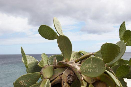a cactus plant on the lanzarote coast