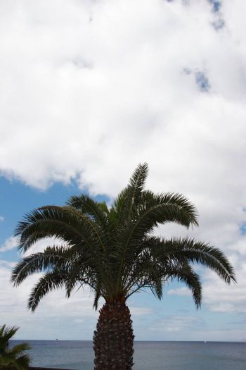 a lanzarote view with palm tree
