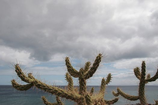 a cactus in front of a sea view