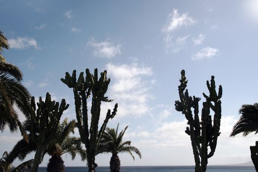 palm trees and cacti on the coast
