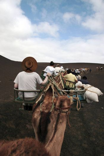 a group of tourists on a camel ride