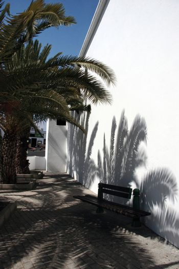 palm trees giving shade to a bench