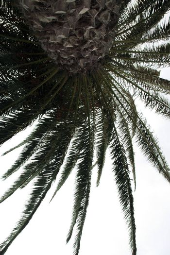an alternative view of a palm tree