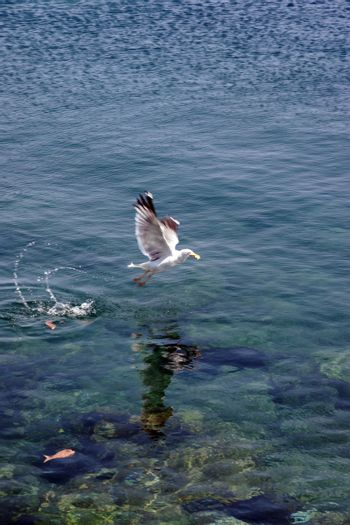 a seagull swooping down for a feed