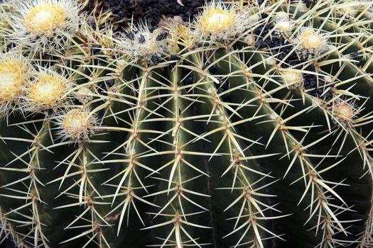 a close up of a round cactus