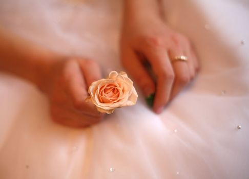 Hands of the bride with a ring and a small rose. All is dim, a flower in a zone of sharpness