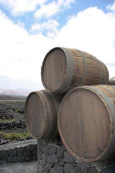 barrels in the wine region of lanzarote