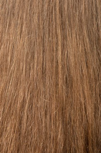 Female hair texture. The rear view