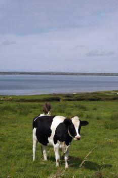 in a rich and beautiful irish farmland