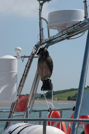 a mascot on the rigging of a boat