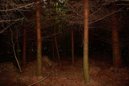 something in the woods is watching you