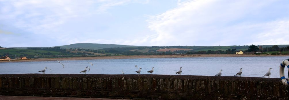 some seagulls perched on a coastal wall