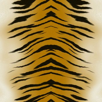 A beautiful tiger skin texture that tiles seamlessly as a pattern in any direction.